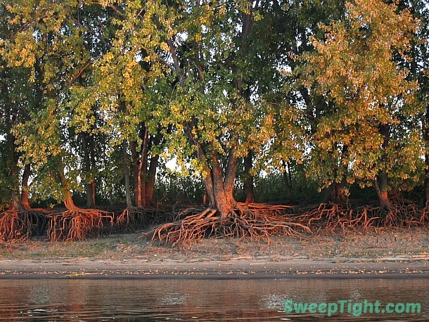 Spooky Trees along the Illinois River