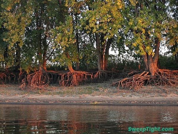 spooky-tree-2