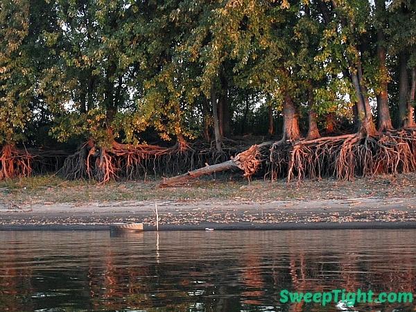 spooky-tree-4