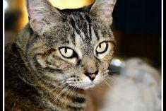 World's Best Cat Litter Review