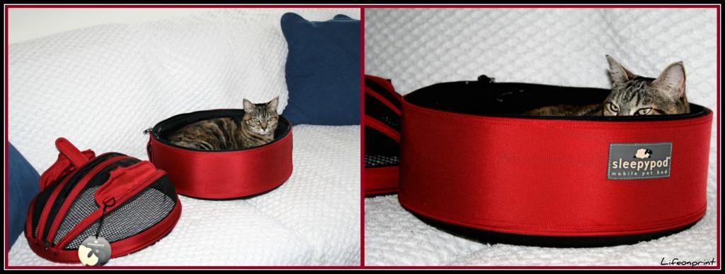 cat looking comfy in her pet carrier