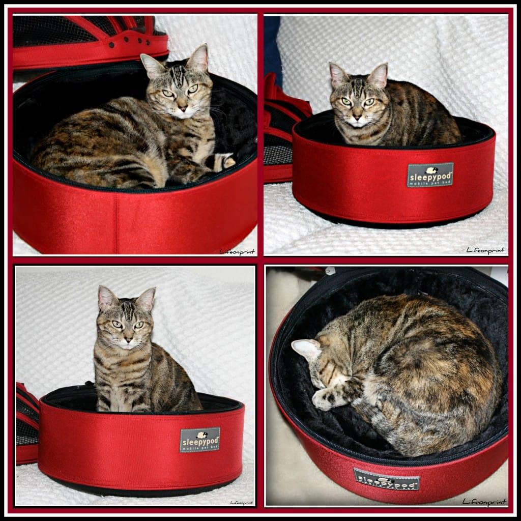 cat in a sleepypod pet carrier