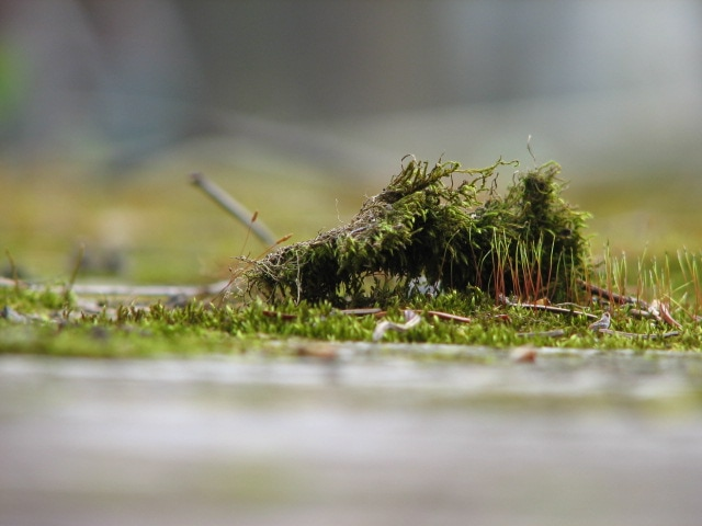 green moss photography