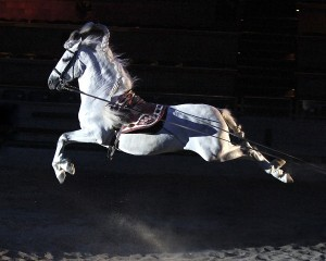 Medieval Times horse