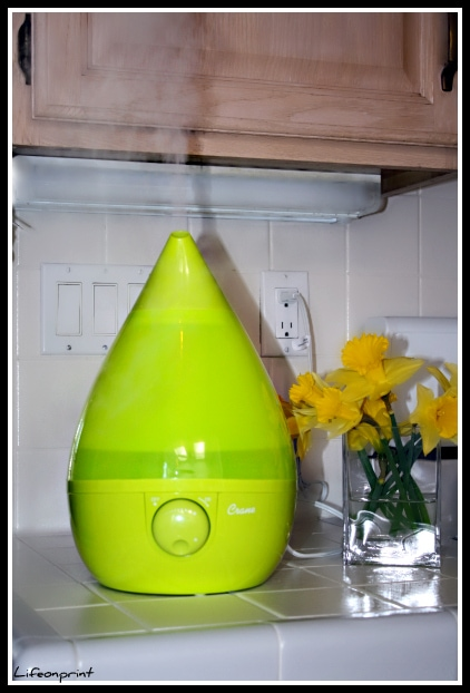 green cool mist humidifier
