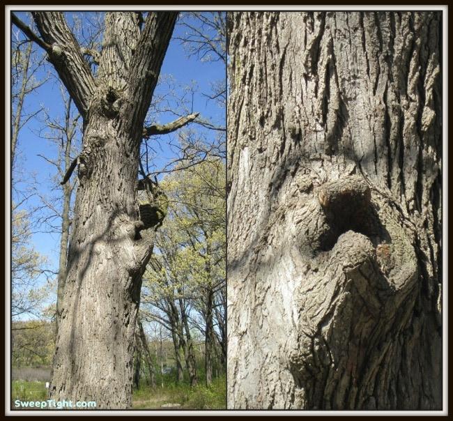 grumpy man tree
