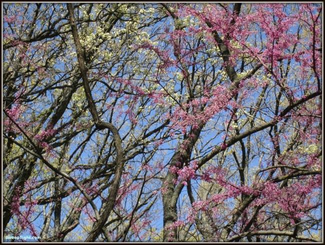 pink white trees