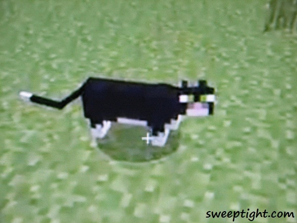 cat from Minecraft