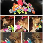 Toys R Us Pet Toys from PetSmart Review