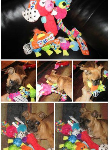 toys r us pets