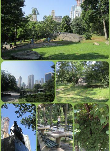 Walking Through Central Park in New York