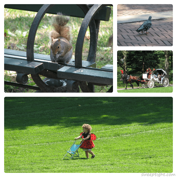 adorable creatures of Central Park