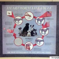 A Poster Like This is in Every Exam Room at my Veterinary Practice