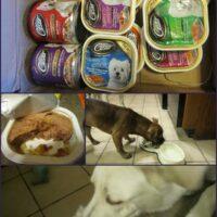 dogs love cesar