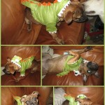 Costumes for Dogs at PetSmart
