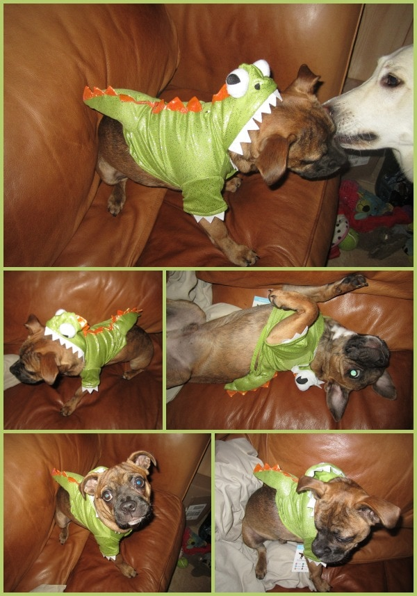 dogs costumes