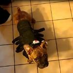 Dog Costumes from PetSmart