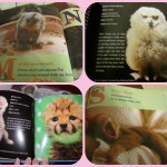 Cute Baby Animal Books from ZooBorns
