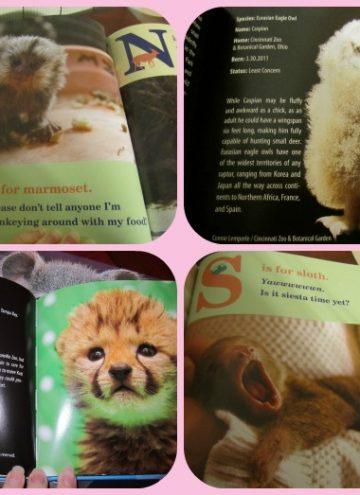 Cute Baby Animal Books from ZooBorns
