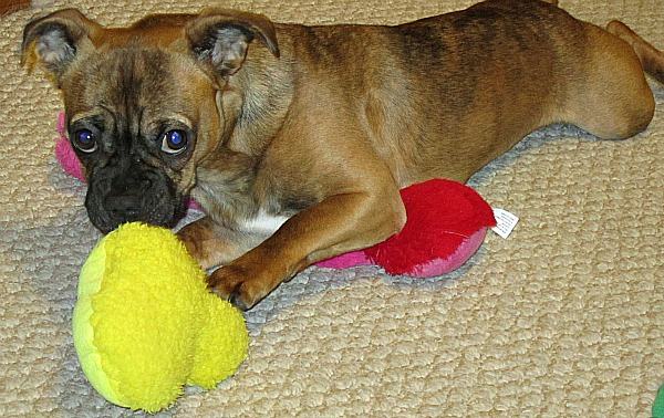Love Your Pet with Toys from PetSmart