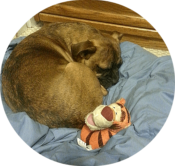 grump and his dog toy