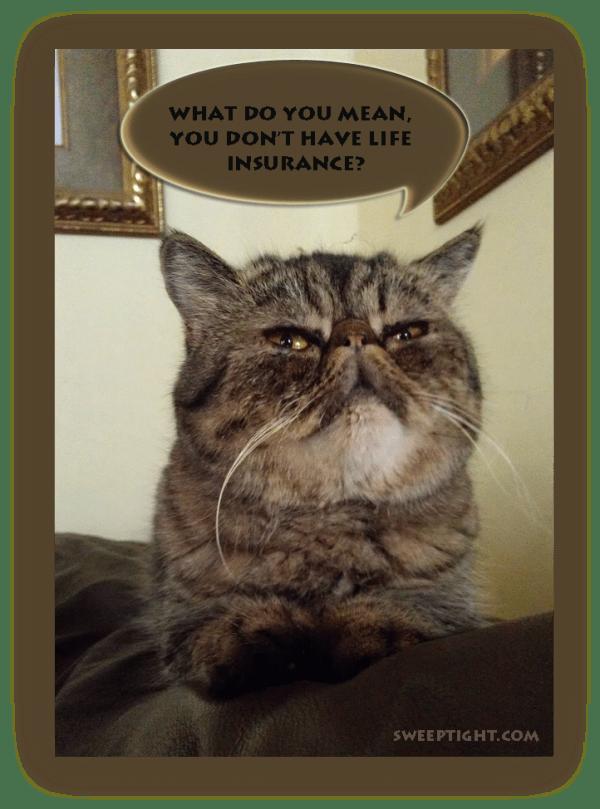 life insurance cat