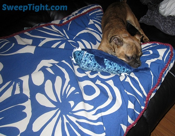 tommy bahama bed and shark
