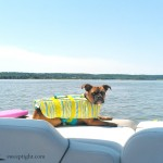Dogs Sail Safely with PetSmart Life Jacket