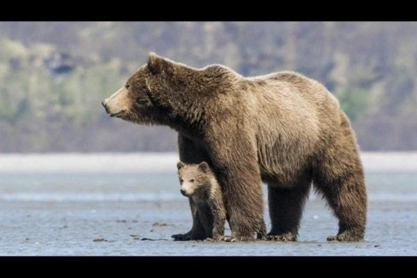mama BEARS family