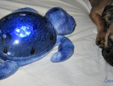 Tranquil Turtle to Relax People of All Ages
