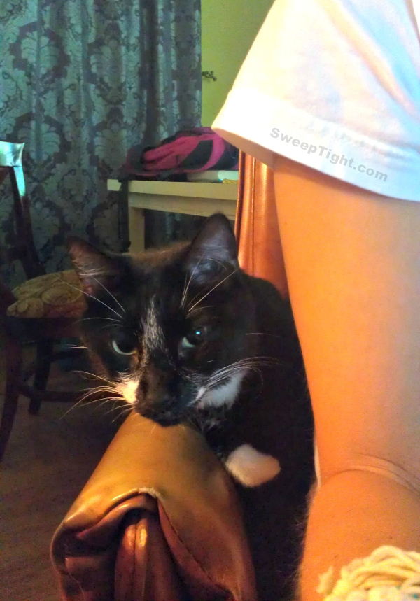 Funny cat blog editor
