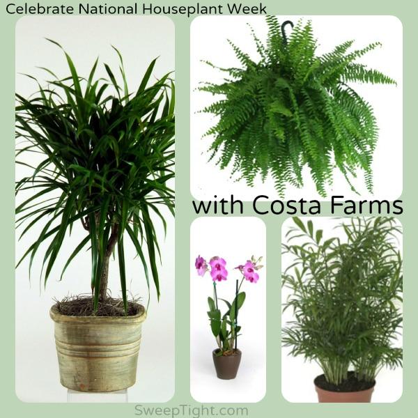 Indoor Houseplant Week