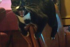 funny cat miserable boss