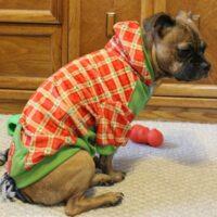 Holiday Hoodie from PetSmart
