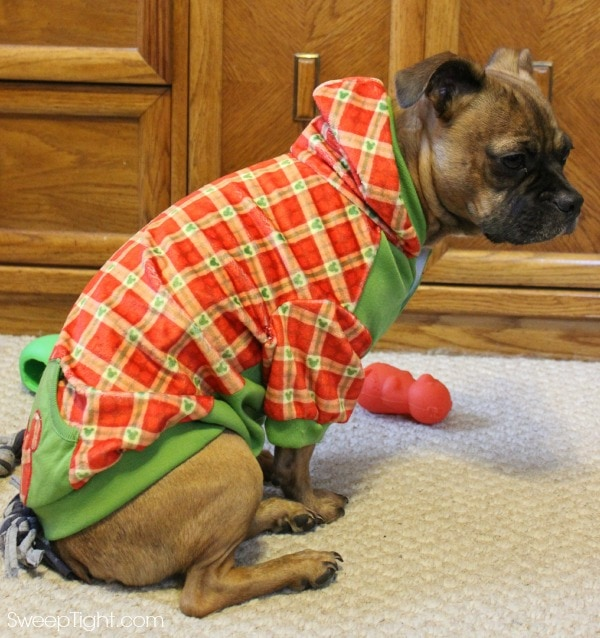 Holiday Pet Costumes and Toys from PetSmart