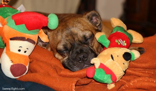 Petsmart Holiday toys