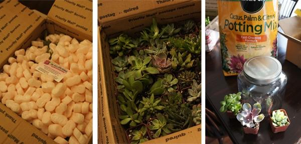DIY Christmas Gift - Succulent Terrarium