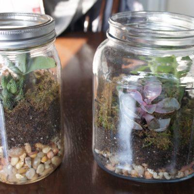 DIY Christmas Gift – Succulent Terrarium