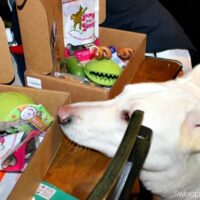 Happy Dog Box for Monthly Pet Goodies