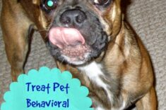 Treating Pet Behavioral Problems Naturally