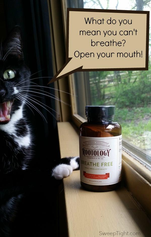 Pollen Count + Cat = :(