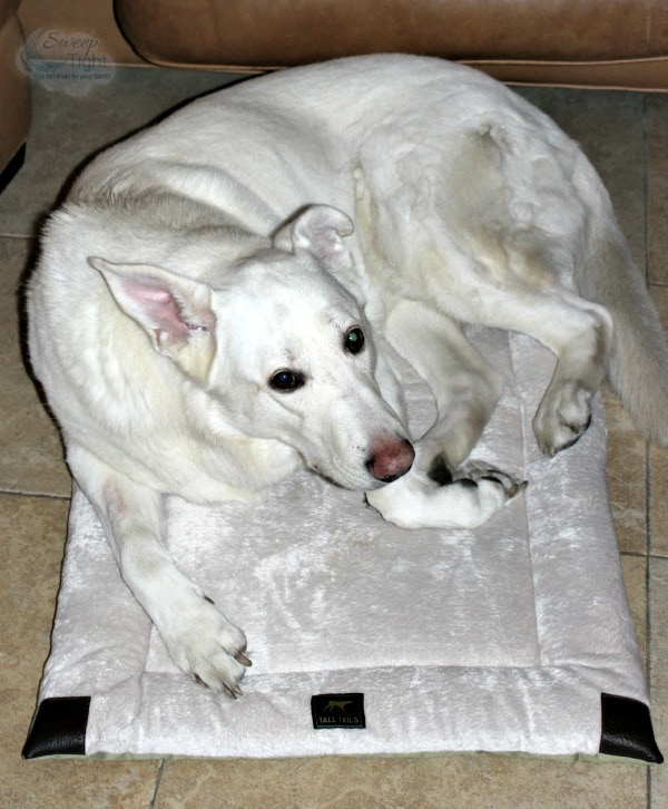 Active Dogs Need Comfy Beds #TallTailsAdventures