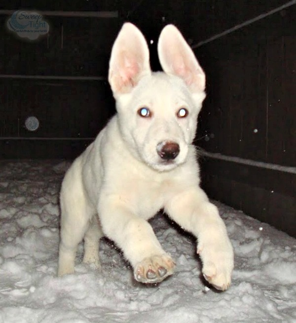 Hilo as a Puppy