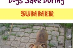 7 Tips to Keep Pets Safe During Summer