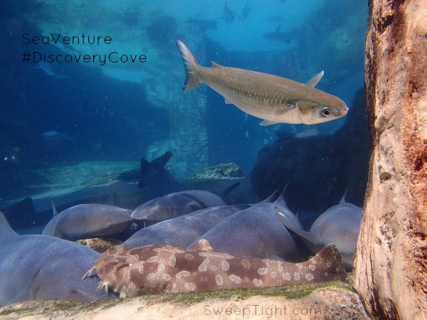 Discovery Cove SeaVenture #RockYourVacation