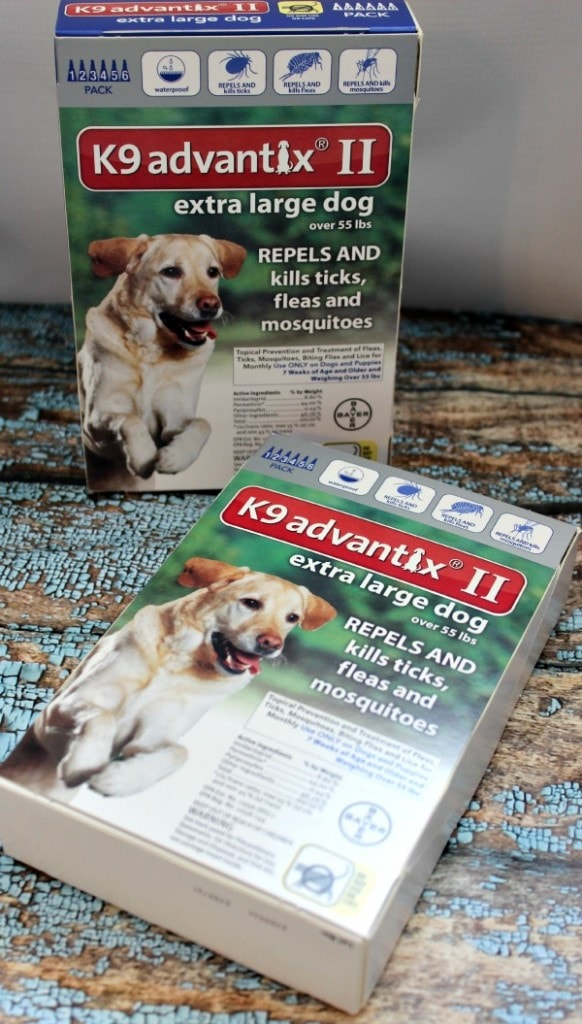 Flea and Tick Horrors and Why Prevention is Key