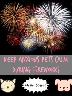 Keep Anxious Pets Calm During Fireworks