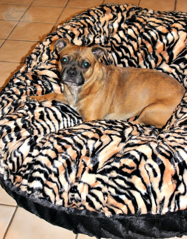 Luxury Pet Bed from Baylee Nasco