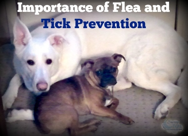 Importance of Flea and Tick Prevention #Seresto
