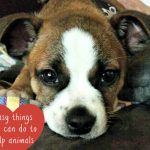 6 Things You Can Do to Help Animals